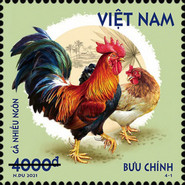[Roosters & Chickens, type EGL]