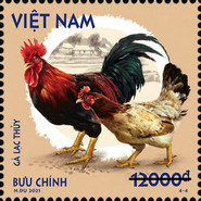 [Roosters & Chickens, type EGO]