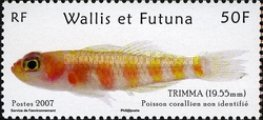 [Native Fish of Wallis and Fortuna, Typ ADS]