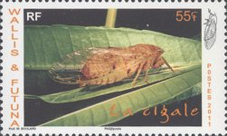 [Insects - Cicada, Typ AGM]
