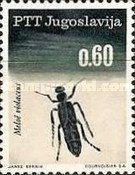 [Insects - Beetles, Typ AUU]