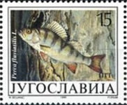 [Freshwater Fish, Typ COO]