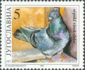 [Birds - Pigeon Breeds, type CPG]