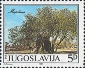 [Old Tree in Mirovica, Typ XBP]